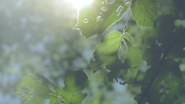 slunce svítilo zelené listy