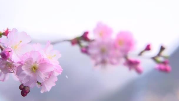 krásné jarní květiny close-up.