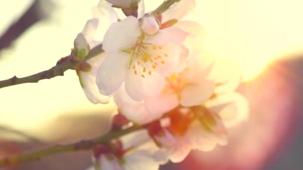 Jarní květiny. Jarní pozadí