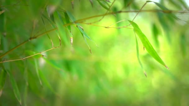 Growing bamboo border design