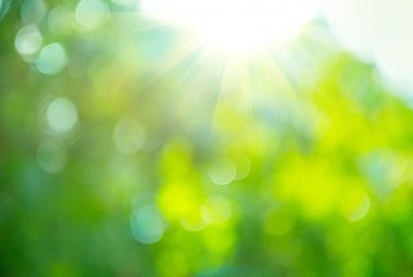 Beautiful Nature Blurred Background. Green Bokeh stock vector