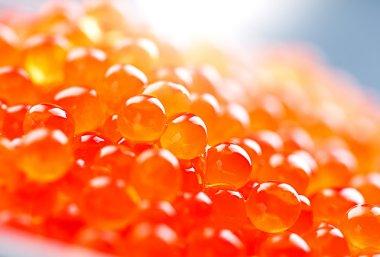 Trout caviar closeup