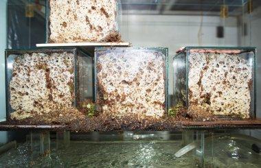 Ants near termitary in Zoo