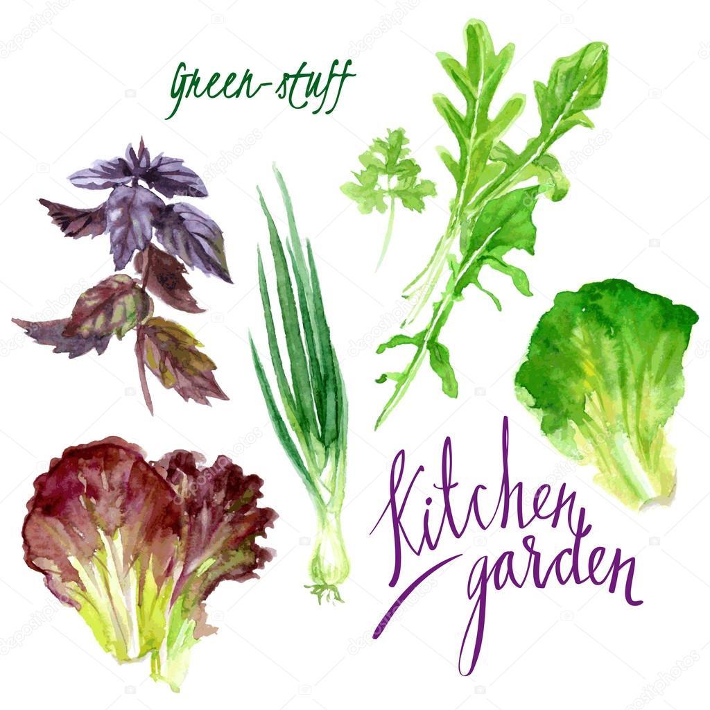 Kitchen garden — Stock Vector © vetryanaya_o #81321930
