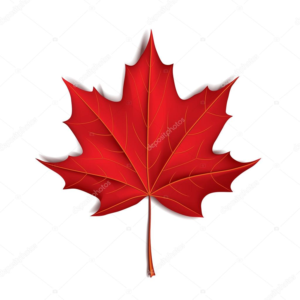 ᐈ Canada Maple Leaf Stock Pictures Royalty Free Canadian Maple Leaf Vectors Download On Depositphotos