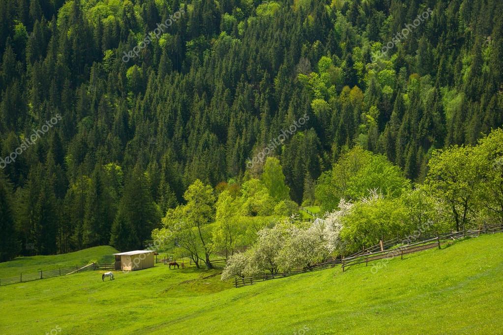 Beautiful rural landscape in the mountains. Pasture. Carpathian