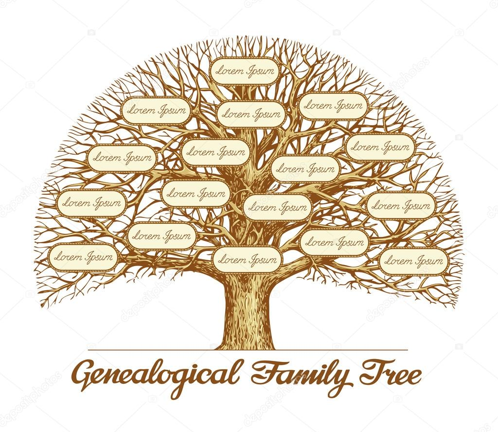 Vintage genealogical family tree leafless old oak tree dynasty vintage genealogical family tree hand drawn sketch vector illustration vector by sergeypykhonin altavistaventures Image collections