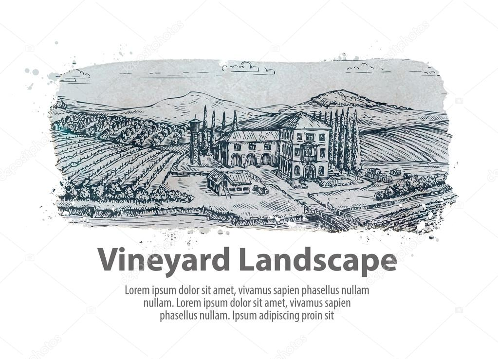 Vineyard landscape. Hand drawn sketch farm, agriculture, harvest, winery
