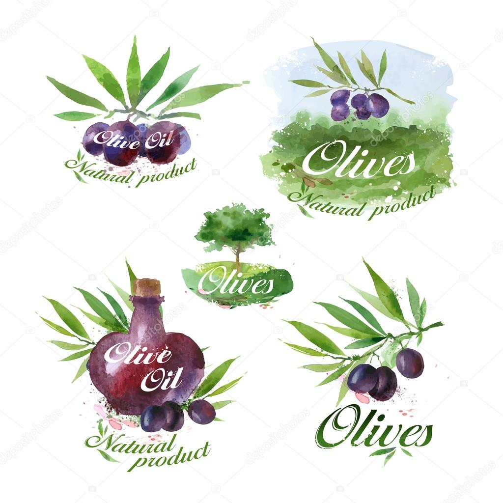 Olive oil. Vector format