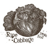 Fresh cabbage logo design template