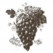 Fotografia Mazzo di modello di progettazione di logo di uva