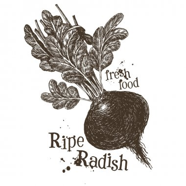Ripe radish logo design template