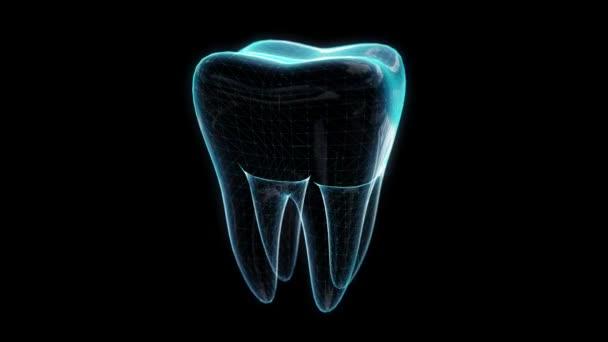 Zahn, Animation des Drehens. Zahn-, Medizin- und Gesundheitskonzept. Polygonnetz des Modells. Looping motion animierter virtueller Raum
