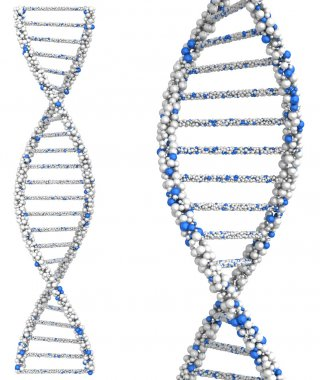 Two helix close up molecules Dna. 3d render on white background