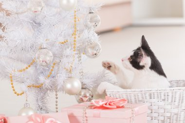 Little cat playing with Christmas tree ornaments