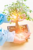 Photo Hands with bonsai tree