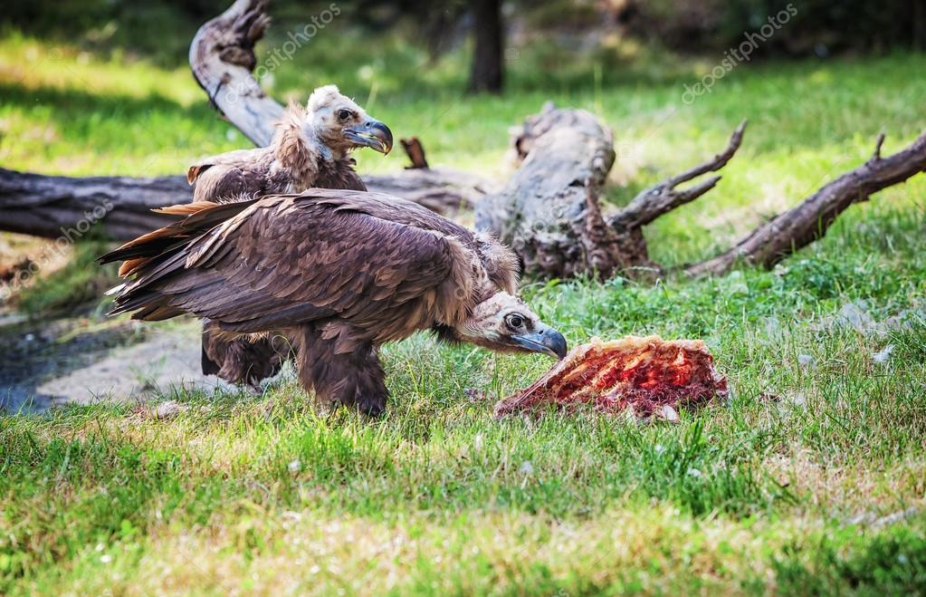 μεγάλο πουλί γάιδαρο δωρεάν πορνό ελεύθερα