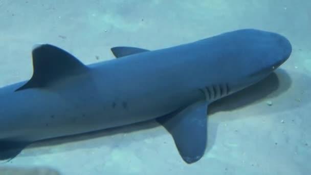 Haie verschiedener Arten schwimmen in einem großen Aquarium