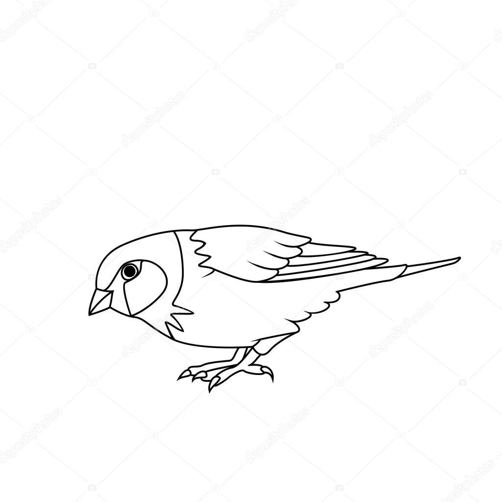 Malbuch: Sparrow — Stockvektor © BlackSpring1 #88656592