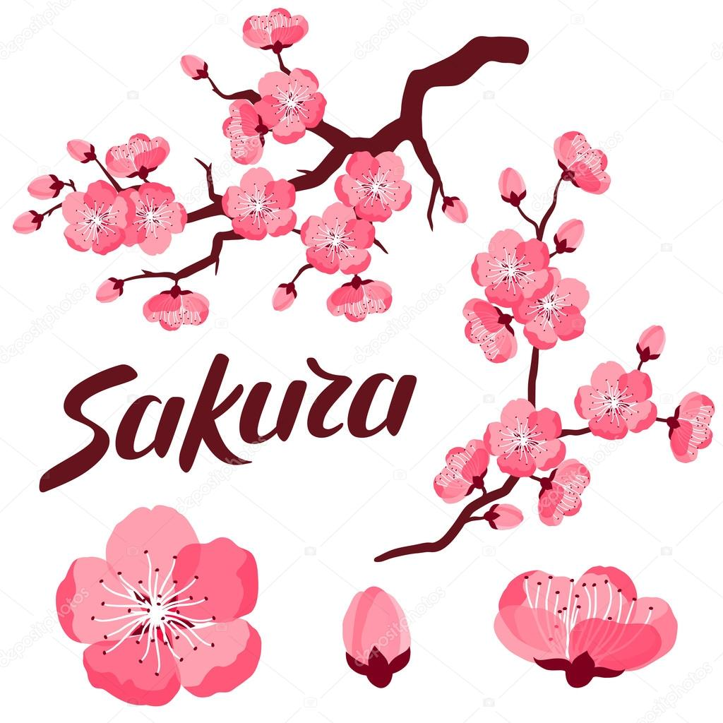 Japanese sakura set of branches and stylized flowers. Objects for decoration, design on advertising booklets, banners, flayers