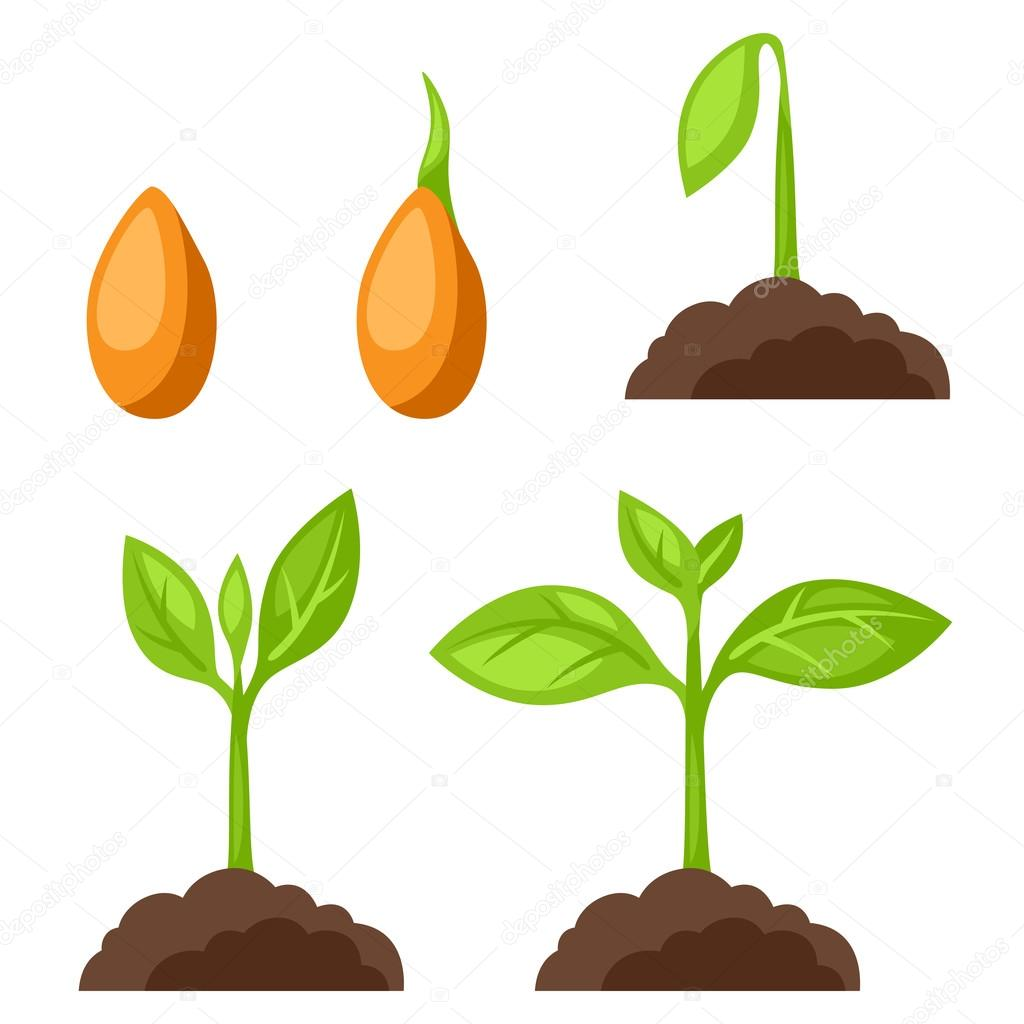 Set of illustrations with phases plant growth. Image for banners, web sites, designs
