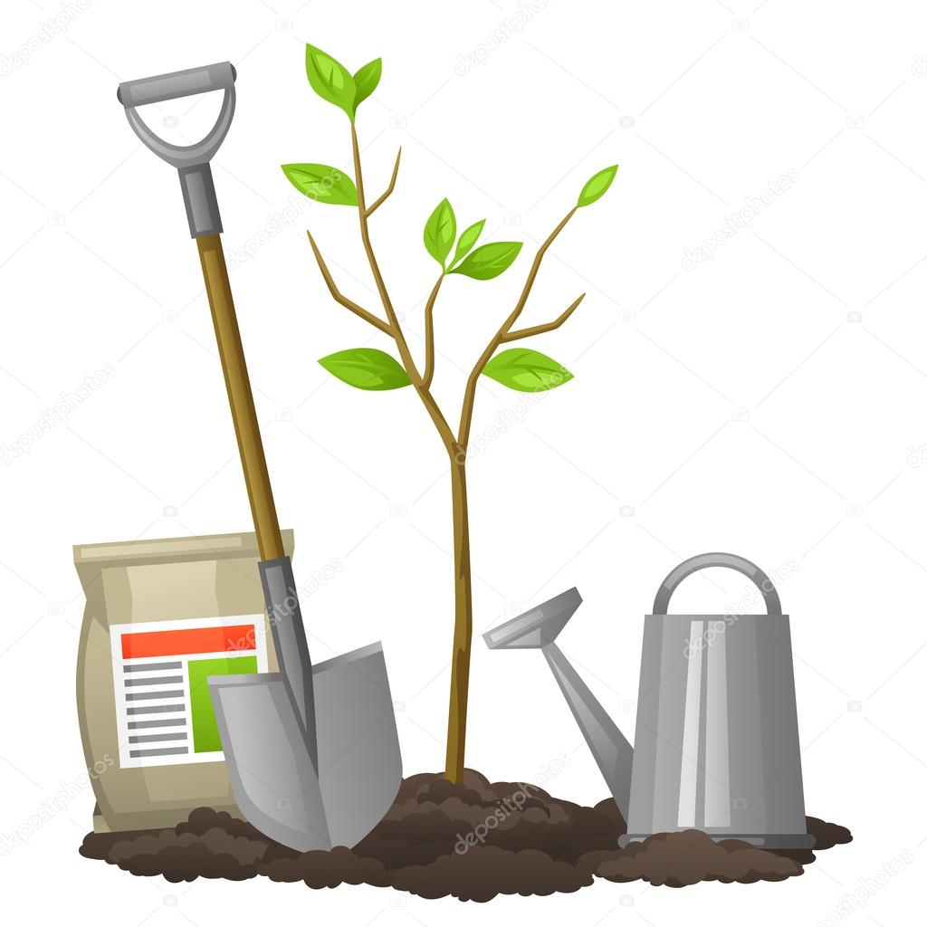 Seedling fruit tree with shovel, fertilizers and watering can. Illustration for agricultural booklets, flyers garden