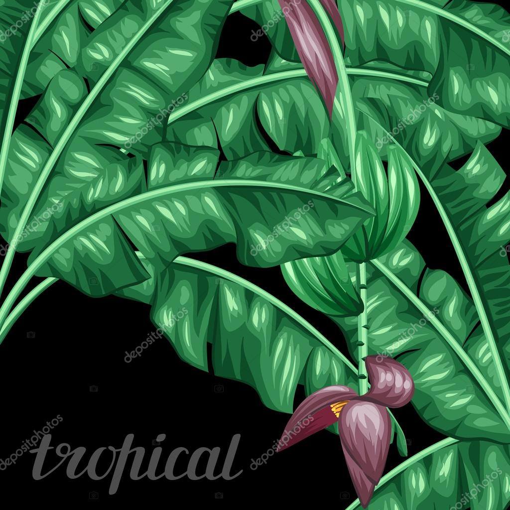 Background with banana leaves. Decorative image of tropical foliage, flowers and fruits. Design Image for advertising booklets, banners, flayers, cards