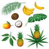 Sada tropické ovoce a listy. Předměty k dekoraci, návrh na reklamních brožur, balení, nabídky, flayers