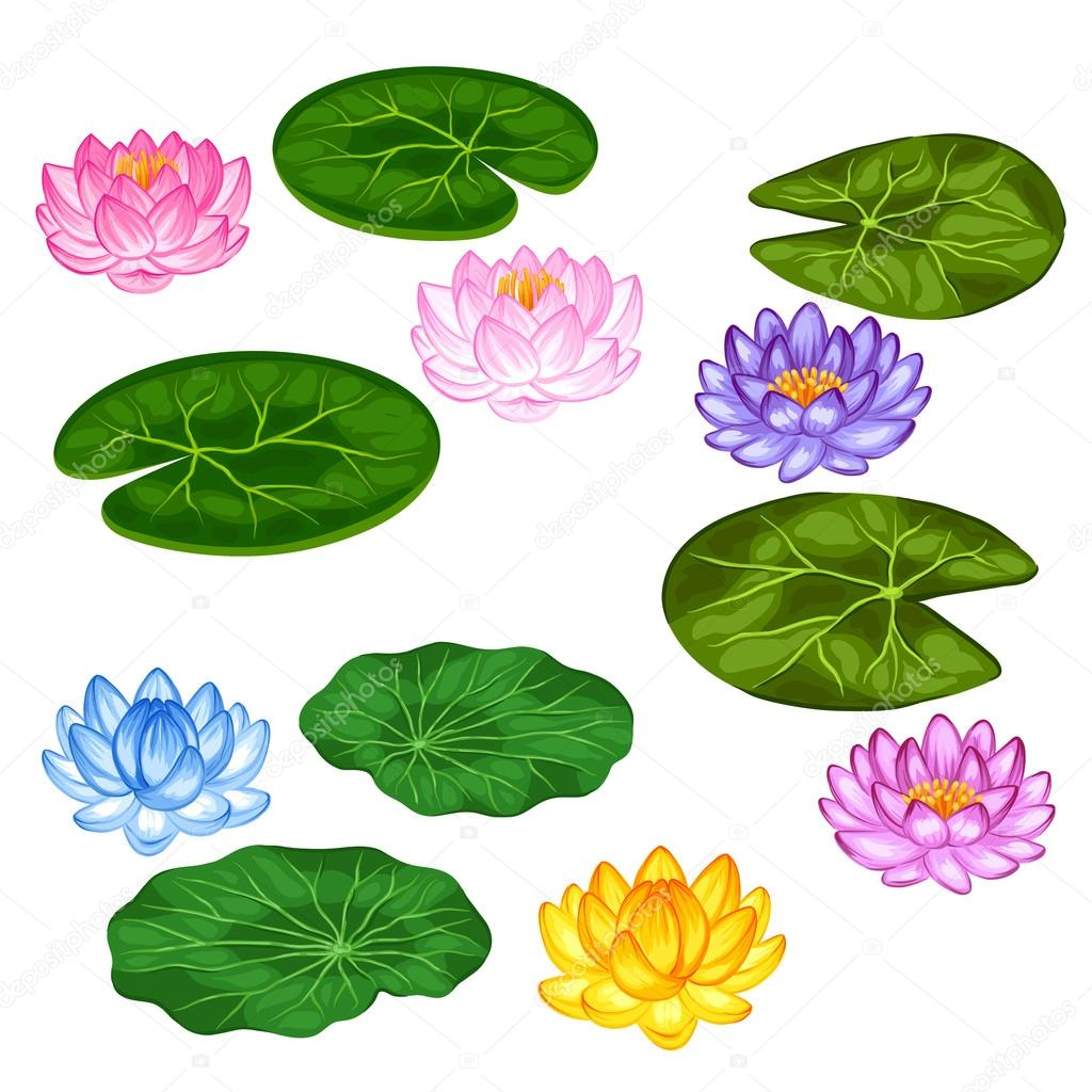 Natural set of stylized lotus flowers and leaves. Objects for decoration, design on advertising booklets, banners, flayers