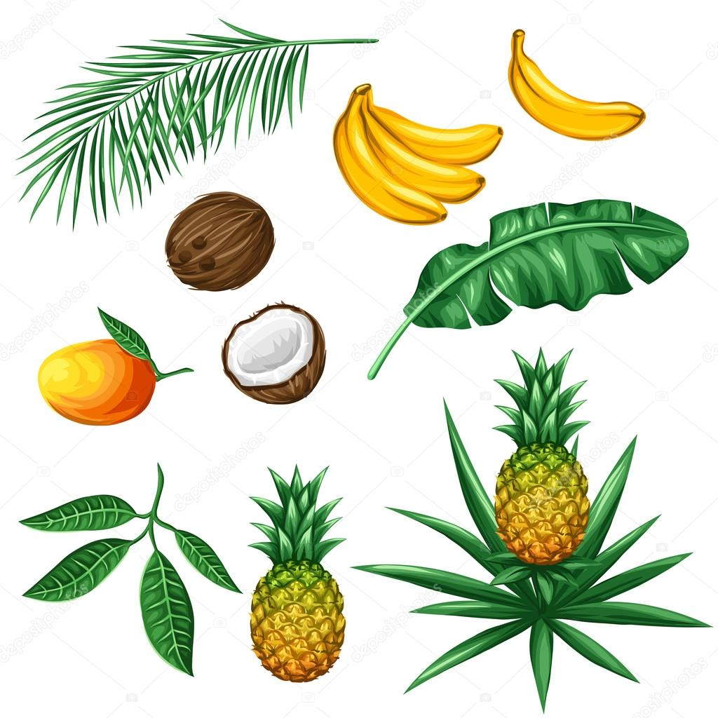 Set of tropical fruits and leaves. Objects for decoration, design on advertising booklets, packaging, menu, flayers