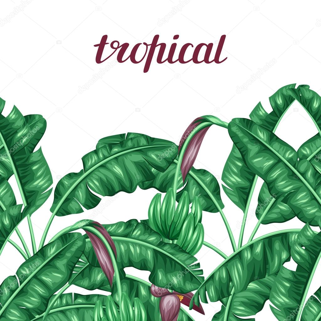 banana leaves paper Here you will find listings of paper banana leaf manufacturers, paper banana leaves suppliers and exporters these paper banana leaf manufacturing companies are.