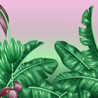 Background with banana leaves. Decorative image of tropical foliage, flowers and fruits. Design for advertising booklets, banners, flayers, cards