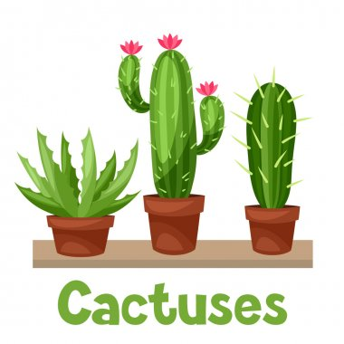 Collection of abstract cactuses in flower pot on shelves