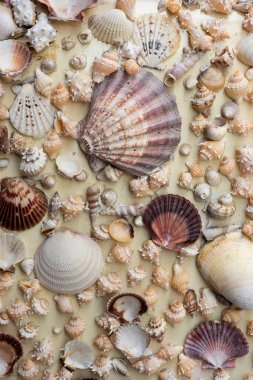 Full-frame vertical close-up of many and sea shells on sand of different shapes and colors in Mexico. Graphic background concept.
