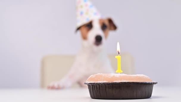 Ein süßer Hund mit festlicher Mütze sitzt vor einer Torte mit brennender Kerze. Jack Russell Terrier feiert Geburtstag