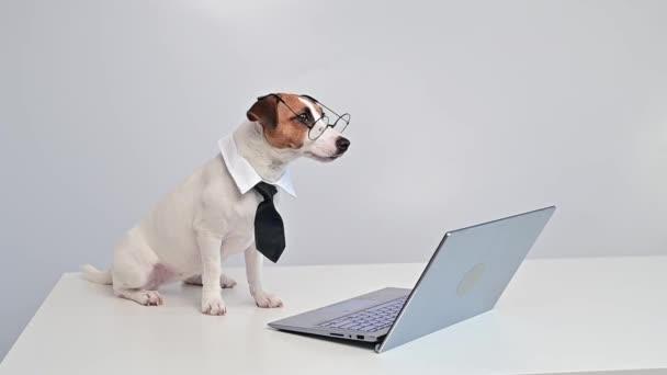 Okos kutya jack Russel terrier nyakkendőben és szemüvegben ül egy laptop fehér alapon.