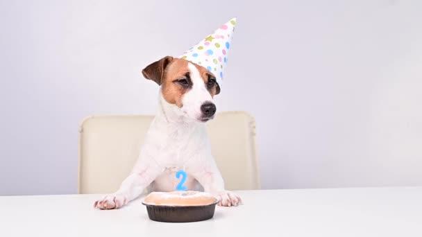 Jack Russell teriér v slavnostní čepici u koláče se svíčkou na bílém pozadí. Pes slaví své druhé narozeniny