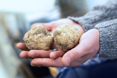 Big Italian white truffles