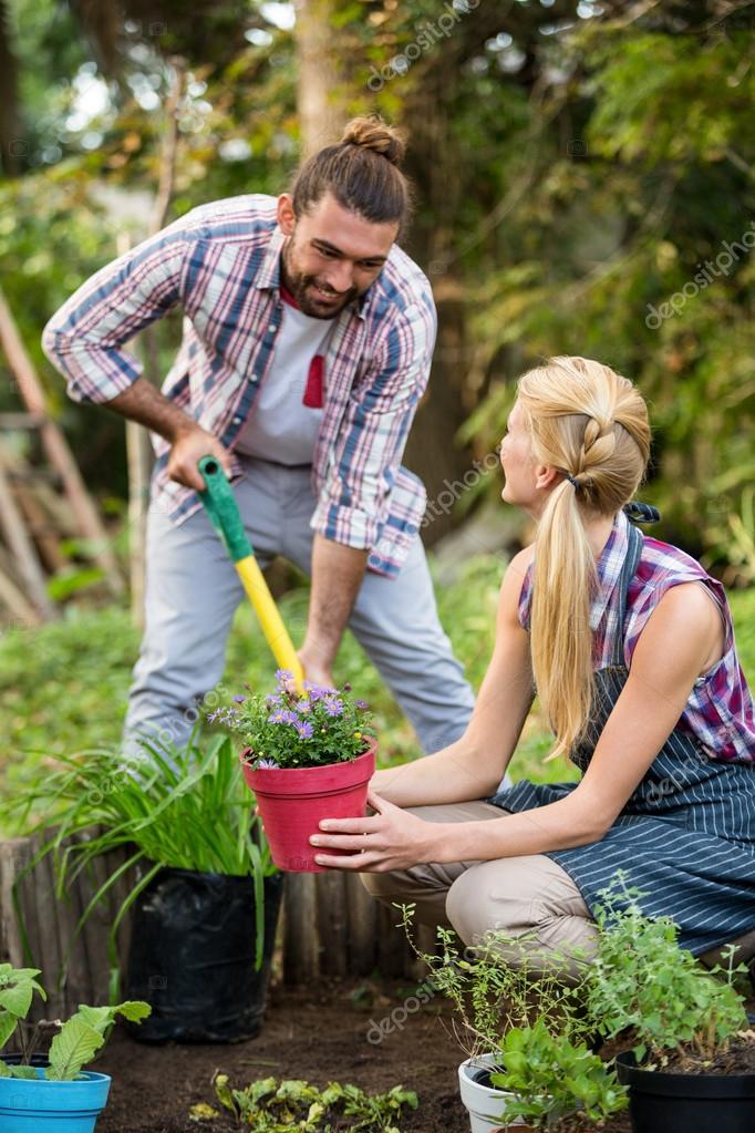 такой фото растений сажаемых в садоводствах полные, худые