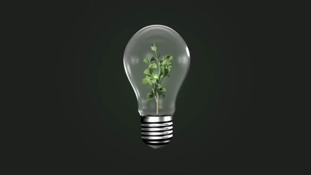 gl hbirne mit wachsender pflanzen stockvideo wavebreakmedia 73495253. Black Bedroom Furniture Sets. Home Design Ideas