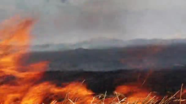 pole vypalování