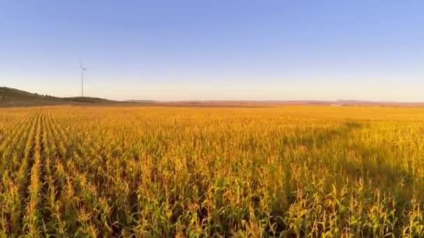 Letecký pohled na kukuřičné pole