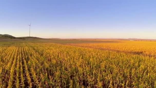 Letecký pohled na pole kukuřice