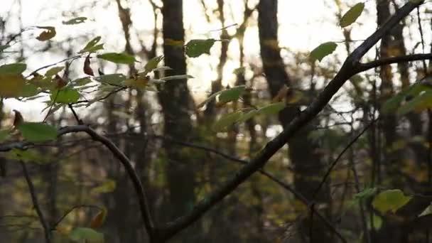Les v pohybu
