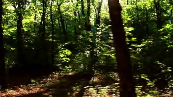 divoký Balkán lesa v pohybu