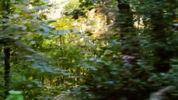 Wild Balkans forest in motion