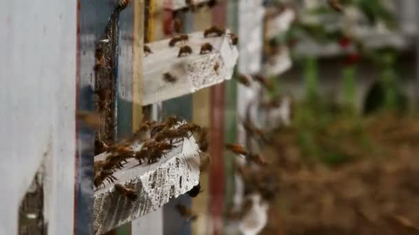 včely v úlu vchod