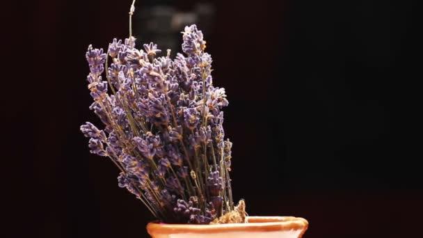 Lavender květiny izolovaných na černou, otáčení