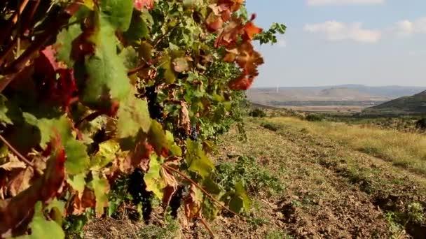 Vinice s červenými listy na podzim