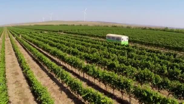 Krásné vinice krajina s větrné turbíny na pozadí, letecký pohled